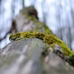 A jouney through rotten wood, pt 2